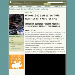 National Zoo Orangutans Turn High-Tech with Apps for Apes