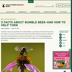 5 Facts About Bumble Bees—and How To Help Them : The National Wildlife Federation Blog