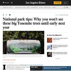 National park tips: Why you won't see these big Yosemite trees until early next year