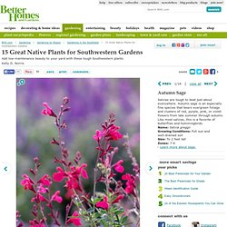 15 Great Native Plants for Southwestern Gardens