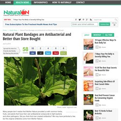 Natural Plant Bandages are Antibacterial and Better than Store Bought