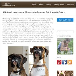 3 Natural Homemade Cleaners to Remove Pet Stains & Odors