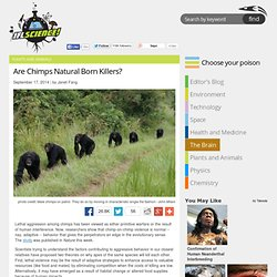 Are Chimps Natural Born Killers?