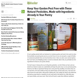 Keep Your Garden Pest Free with These Natural Pesticides, Made with Ingredients Already in Your Pantry