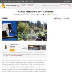 Natural Pest Control for Your Garden! : 9 Steps (with Pictures) - Instructables