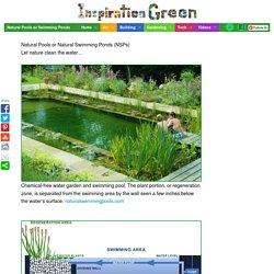 Natural Pools or Swimming Ponds