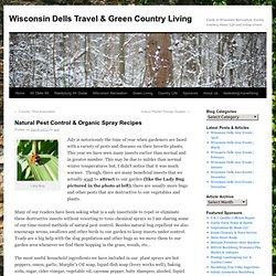 Natural Pest Control, Organic Spray Recipes & Disease Prevention