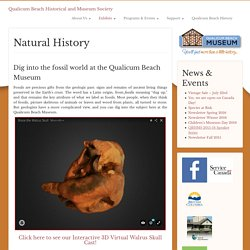 Natural History « Qualicum Beach Historical and Museum Society