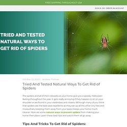 Spider Repellent Spray - MDX — MDX Concepts