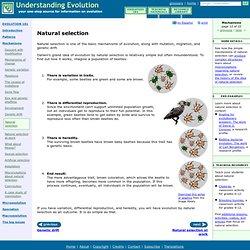 evolution taxonomy pearltrees. Black Bedroom Furniture Sets. Home Design Ideas