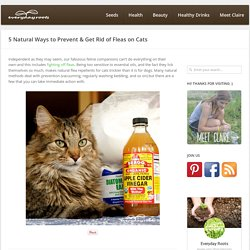 5 Natural Ways to Prevent & Get Rid of Fleas on Cats