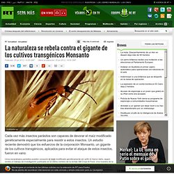 La naturaleza se rebela contra el gigante de los cultivos transgénicos Monsanto