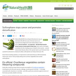 Sulforaphane stops cancer and promotes detoxification