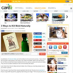three-ways-to-kill-mold-naturally