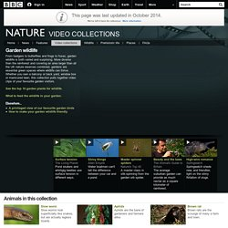 BBC Nature - Video collection: Garden wildlife
