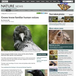 BBC Nature - Crows know familiar human voices