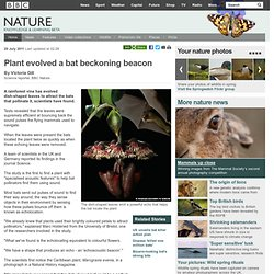 BBC Nature - Plant evolved a bat beckoning beacon