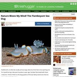 Nudibranchs - The Flamboyant Sea Slug