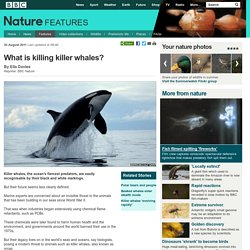 BBC Nature - What is killing killer whales?