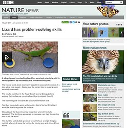 BBC Nature - Lizard has problem-solving skills