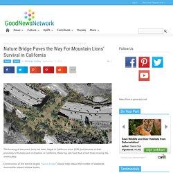 Nature Bridge Paves Way For Mountain Lion's Survival