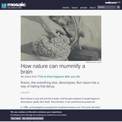 How nature can mummify a brain
