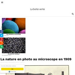 La nature en photo au microscope en 1909