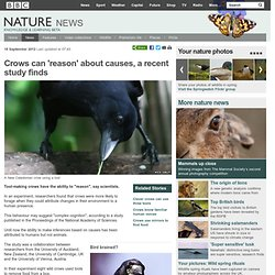 BBC Nature - Crows can 'reason' about causes, a recent study finds