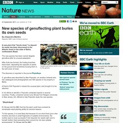 BBC Nature - New species of genuflecting plant buries its own seeds