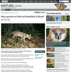 BBC Nature - New species of wild cat identified in Brazil