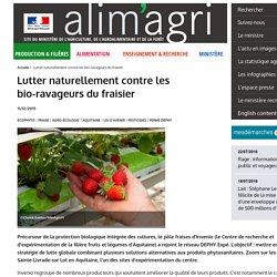 MAAF 11/12/15 Lutter naturellement contre les bio-ravageurs du fraisier
