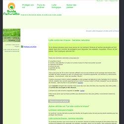 Lutte contre les limaces : barrières naturelles