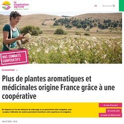 Plantes naturelles et coopératives