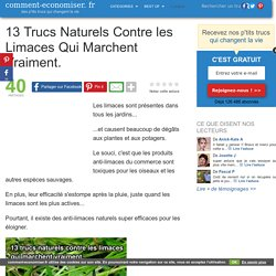 13 Trucs Naturels Contre les Limaces Qui Marchent Vraiment.