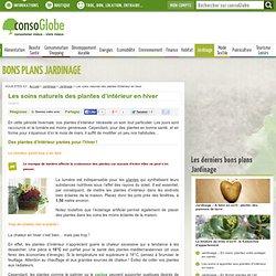 Les soins naturels des plantes d'intérieur en hiver