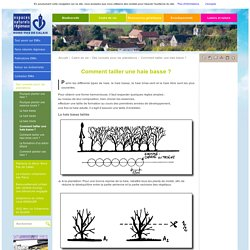 Comment tailler une haie basse ? / Des conseils pour les plantations / Cadre de vie / Accueil
