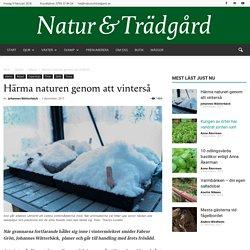 Härma naturen genom att vinterså