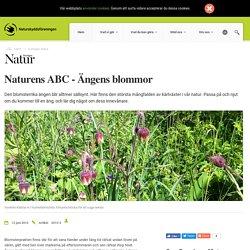Naturens ABC - Ängens blommor