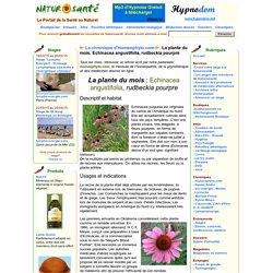 La chronique d'Homeophyto.com - La plante du mois: Echinacea angustifolia, rudbeckia pourpre
