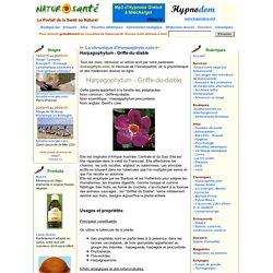 La chronique d'Homeophyto.com - Harpagophytum - Griffe-du-diable