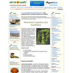 La chronique d'Homeophyto.com - Ces quelques fleurs: Humulus Lupulus (Le houblon)