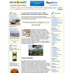 La chronique d'Homeophyto.com - Ces quelques fleurs: Foeniculum vulgare (Le fenouil)