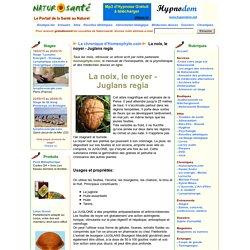 La chronique d'Homeophyto.com - La noix, le noyer - Juglans regia