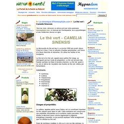 La chronique d'Homeophyto.com - Le thé vert - Camelia Sinensis