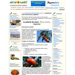 La chronique d'Homeophyto.com - La plante du mois: Rosa canina, l'églantier