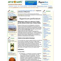 La chronique d'Homeophyto.com - Hypericum perforatum, le Millepertuis