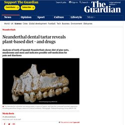 Neanderthal dental tartar reveals plant-based diet – and drugs