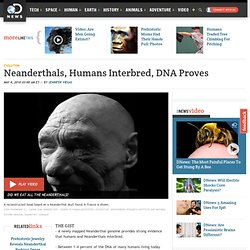Neanderthals, Humans Interbred, DNA Proves