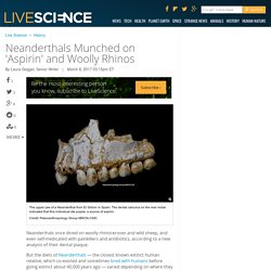 Neanderthals Munched on 'Aspirin' and Woolly Rhinos