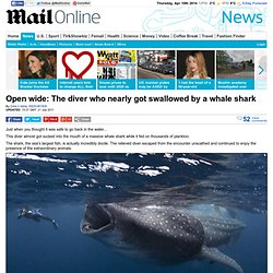 Open wide: The diver who nearly got swallowed by a whaleshark